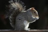 January 16, 2007Squirrel