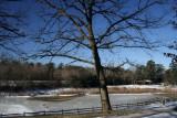 February 7, 2007Tree In Park
