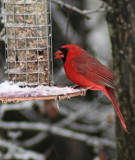 CardinalApril 15, 2007
