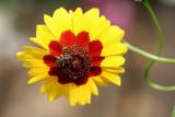 Flower MacroJuly 10, 2007