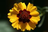 Wild FlowerJuly 13, 2007