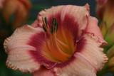 Flower MacroJuly 19, 2007