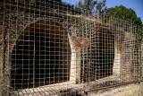 Lion cages in Fasilidas' Castle Complex
