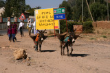 Donkeys walk on Denver Street in Axum
