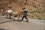 The roads near Lalibela carry more pedstrians and animals than automobiles.