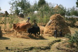 A local family works with hay and livestock