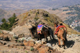Our mules head down the rocky, steep trail to Lalibela.