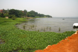 The lush northern shore of Lake Victoria