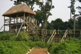 Observation platforms make viewing the chimpanzees easier, if they are nearby.