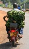Transporting bananas to market