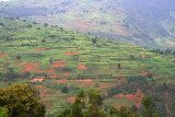 Rwanda is called the Land of a Thousand Hills, and it seems like all of the hills are cultivated.