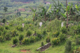 Chinese graves in rural Rwanda