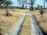 Typical road in Moremi -- 4WD required!
