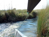 Boat ride through narrow channels in the Delta