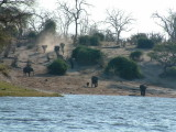 Elephants hurry to the river to drink at the end of a day without water