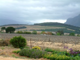 A visit to the Cape Winelands