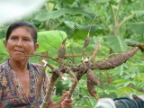 A local woman shows us a root
