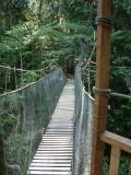 Canopy walkway at La Posada Lodge