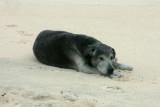 Uli, the amazing whale-detecting dog