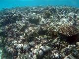 The vibrant reef between Mounu and Ovalu Islands