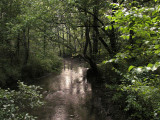 P8054234.Stream2Nicer-r8.jpg