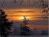 ANOTHER WINTER SUNRISE HERE IN SW WASHINGTON