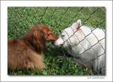 A Dog's Love Story
