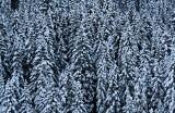 First Snow #3 *