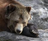 Bear Necessities *