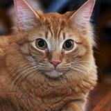 The Cat *