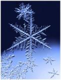 Snowflake Melee