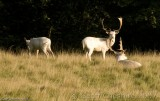 The White Stags