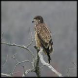 Bald Eagles 2007