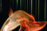 Danza oriental  / Belly Dance