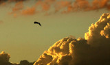 bird sky cloud