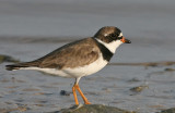 florida_shorebirds