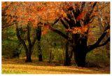 *** Autumn Dance