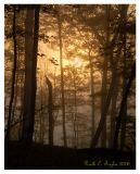 Misty Sunrise Through the Trees