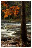Tohickon Creek in Autumn