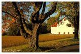 Durham Farm