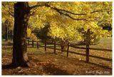 Autumn Light Show Tinicum Park
