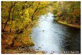 Autumn  Yellows Along Tohickon Creek