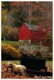 Autumn at Cuttalossa Farm