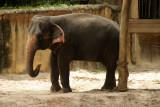 singapore zoo (12).JPG