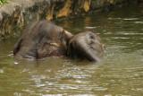 singapore zoo (13).JPG
