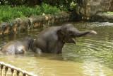 singapore zoo (15).JPG