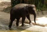 singapore zoo (16).JPG