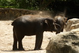 singapore zoo (17).JPG