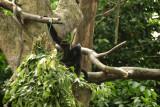 singapore zoo (18).JPG