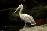 singapore zoo (19).JPG
